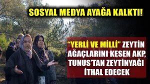"""AKP, """"yerli ve milli"""" zeytin ağaçlarını kesip Tunus'tan zeytinyağı ithal ediyor!"""