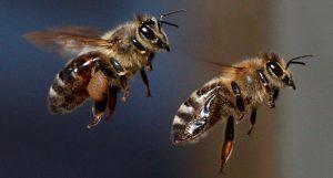 500 bin arının ölümüne yol açan çocuklar gözaltına alındı