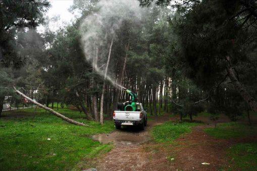 Beylikdüzü'nde çam ağaçları özenle korunuyor