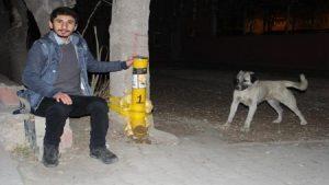 Üniversiteli, öğrenim bursu ile sokak hayvanlarını doyuruyor