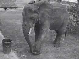 Filden ders gibi hareket: Çöpleri topladı, çöp kutusuna attı!