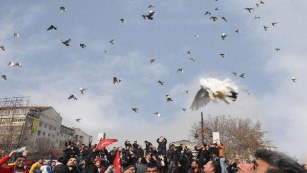 Zeytin Dalı Harekatı için bin güvercin doğaya bırakıldı