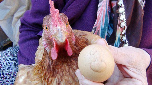 Bu yumurtanın tanesi bin lira!