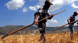 Devlet çiftçiyi değil, çiftçi devleti destekliyor