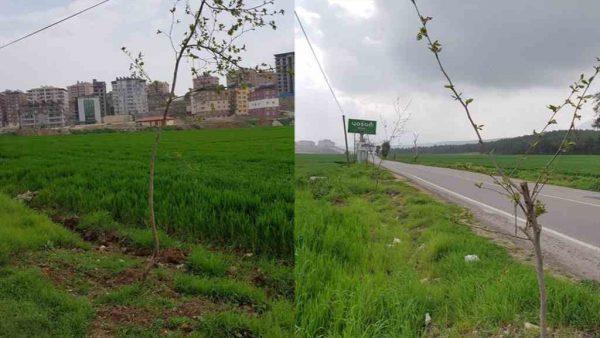 Belediye Hatay'ı yeşillendirmeye devam ediyor