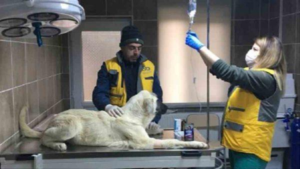 Çorlu'da yavru köpek donmaktan kurtarıldı