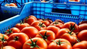 Rusya 17 ton Türk domatesine el koydu