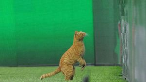 Sahaya giren kedi maçı durdurdu