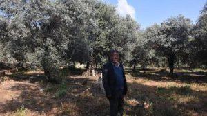 Mezarlığı zeytinliğe dönüştüren 600 yıllık gelenek