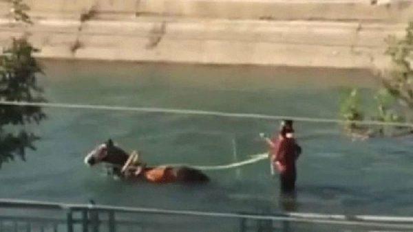 Yer: Adana! Su kanalında at arabasıyla gezintiye çıktılar