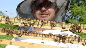 Arı sütünün hasadı başladı: Kilosu 4 bin TL