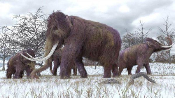 4 bin yıl önce yok oldular… Tekrar dünyaya geliyorlar