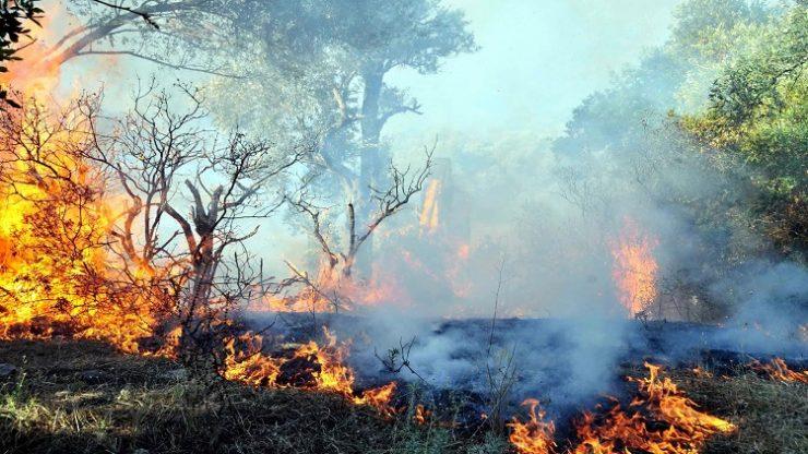 Bodrum'da 3 hektar makilik yandı