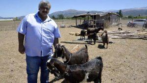Amatör kulüp, futbolcu satıp, keçi aldı