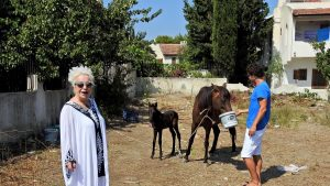 Hurdacının terk ettiği hamile atı sahiplendi