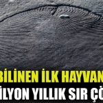 En eski hayvan