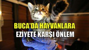 Buca'da hayvanlara eziyete karşı önlem