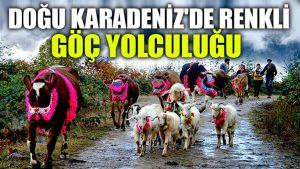 Doğu Karadeniz'de renkli göç yolculuğu