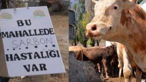 Ankara Valiliğinden 'şarbon' açıklaması
