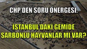 CHP'den soru önergesi: İstanbul'daki gemide şarbonlu hayvanlar mı var?