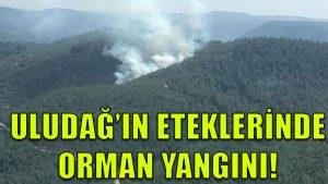 Uludağ'ın eteklerindeki ormanlıkta yangın