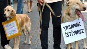 Bolu'da 3 yavru köpeği tüfekle vurdular