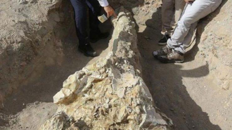 Kayseri'de 7,4 milyon yıllık fil kafatası bulundu