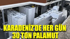 Karadeniz'de her gün 30 ton palamut!