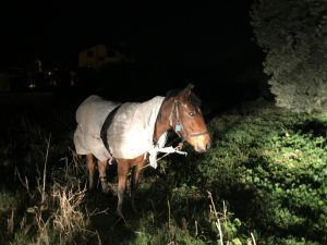 Bursa'da soğuk hava nedeniyle atı naylona sardılar