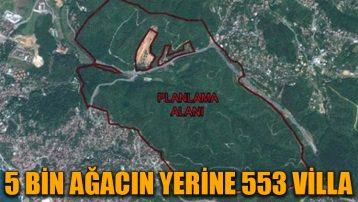 5 bin ağacın yerine 553 villa