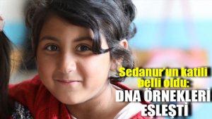 Sedanur'un katili belli oldu: DNA örnekleri eşleşti