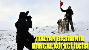 İtalyan basınının Kangal köpeği ilgisi