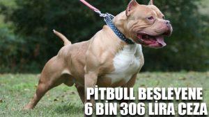 Pitbull besleyene 6 bin 306 lira ceza